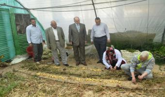 نائب رئيس الجامعة .. نجاح إنتاج تقاوى البطاطس بإستخدام تقنيات زراعة الأنسجة النباتية