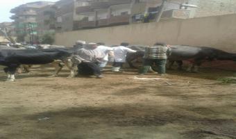 قافلة طبية بيطرية إلى قرية البتانون بمركز شبين الكوم